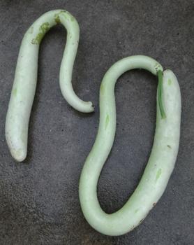 ital snake.jpg